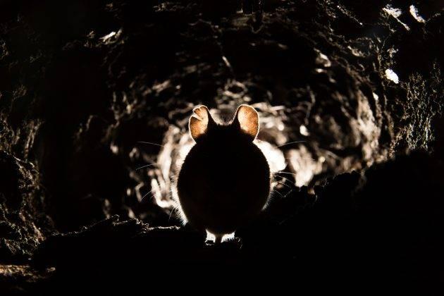 www.juicysantos.com.br - ratos na praia de santos