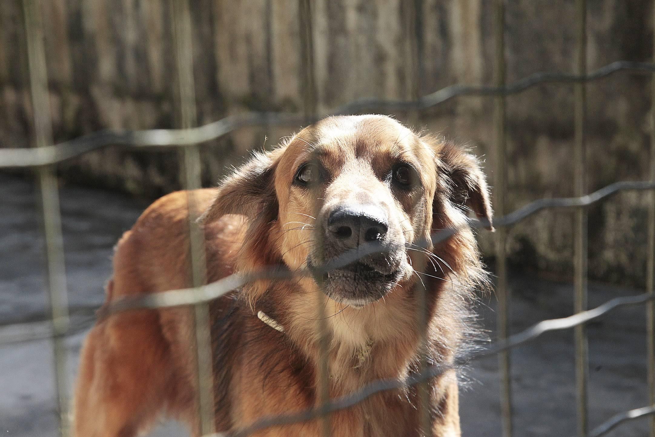 www.juicysantos.com.br - adoção de cachorros em santos aumenta durante a quarentena