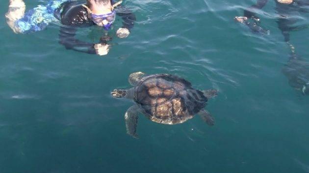 juicysantos.com.br - devolução das tartarugas tratadas no Aquário de Santos