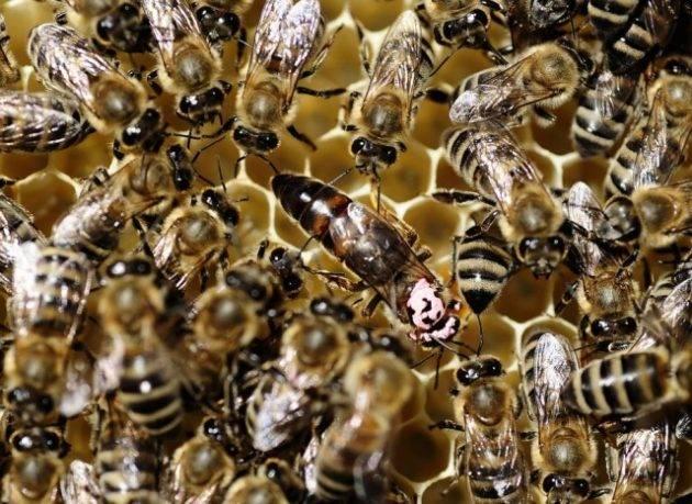 juicysantos.com.br - zoológico de insetos