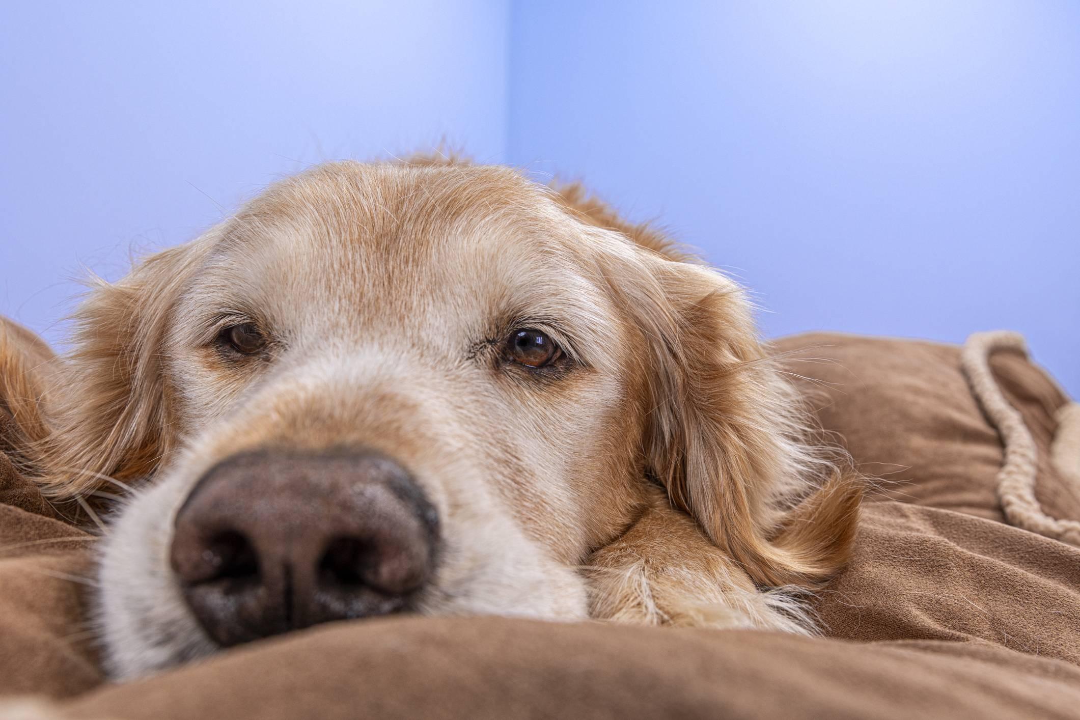 www.juicysantos.com.br - câncer de próstata em cachorros