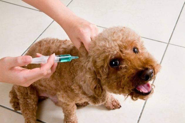 juicysantos.com.br - Hospital veterinário municipal em Santos