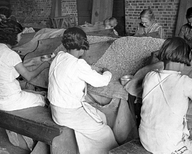 juicysantos.com.br - Mulheres na história do café